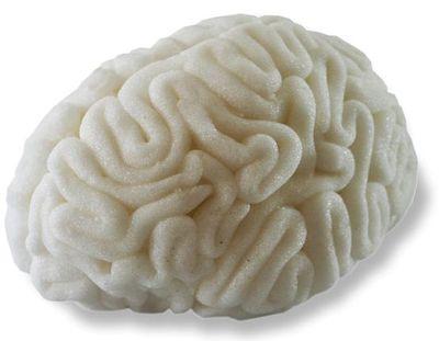 Brain human2a