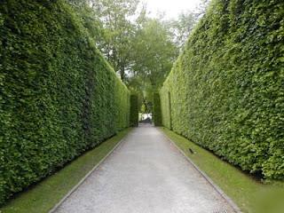 Hedge19
